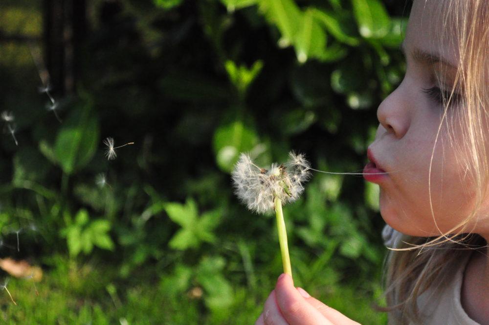 primavera sense alèrgies